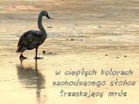 Haiku i zdjęcie
