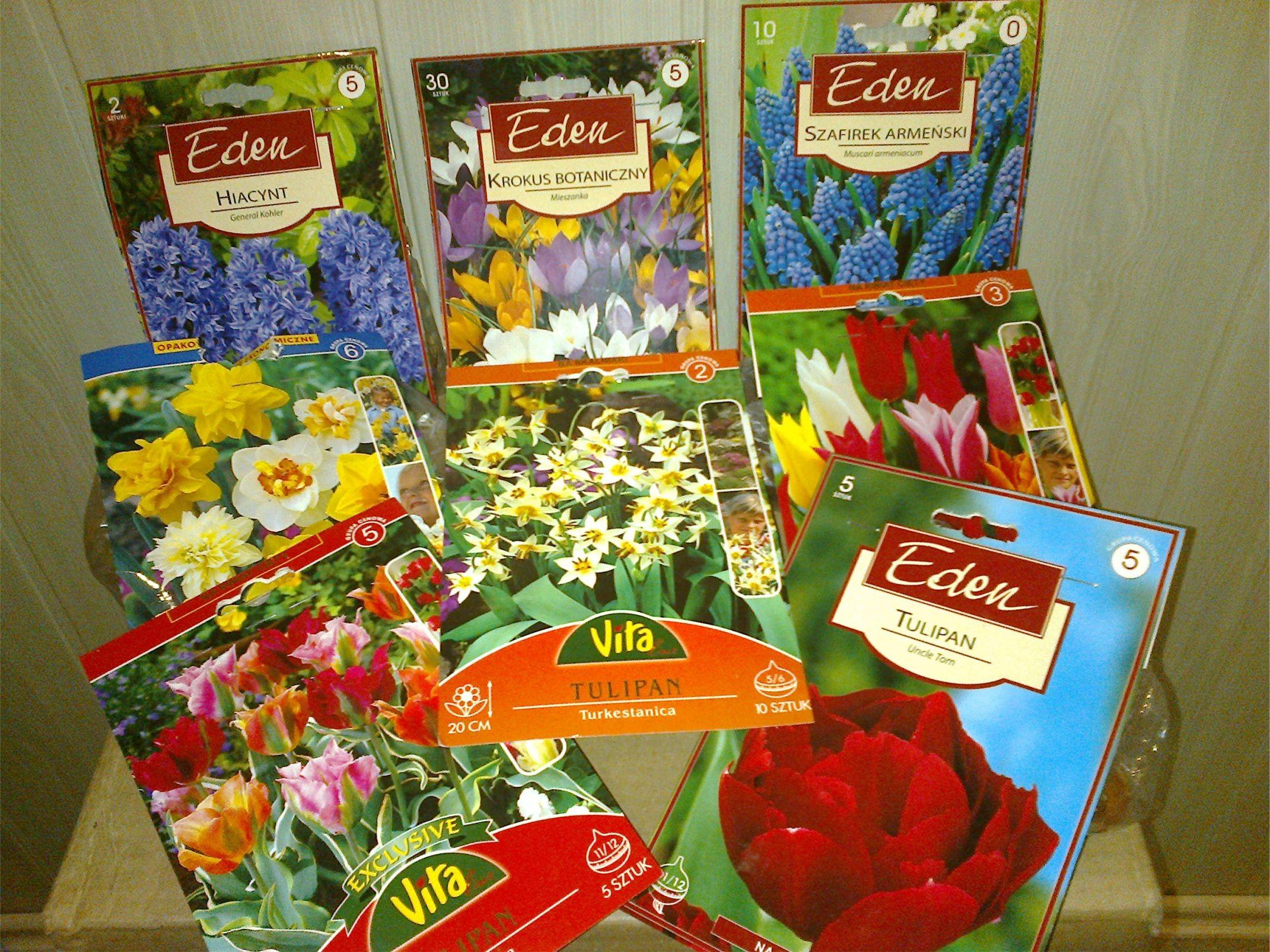 Ogrod tulipany1