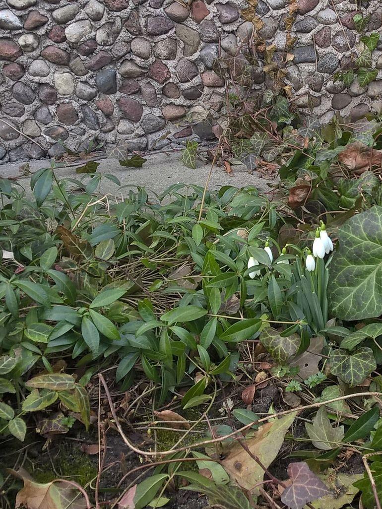 zwiastuny wiosny 1